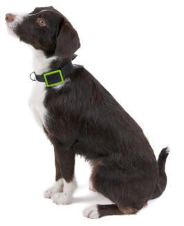 Weenect Pets GPS nu met € 30 retour op uw bankrekening