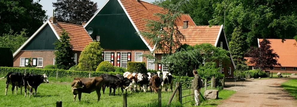 Wandel langs de monumentale boerderij Hof Brunink, nu een biologisch melkveebedrijf.
