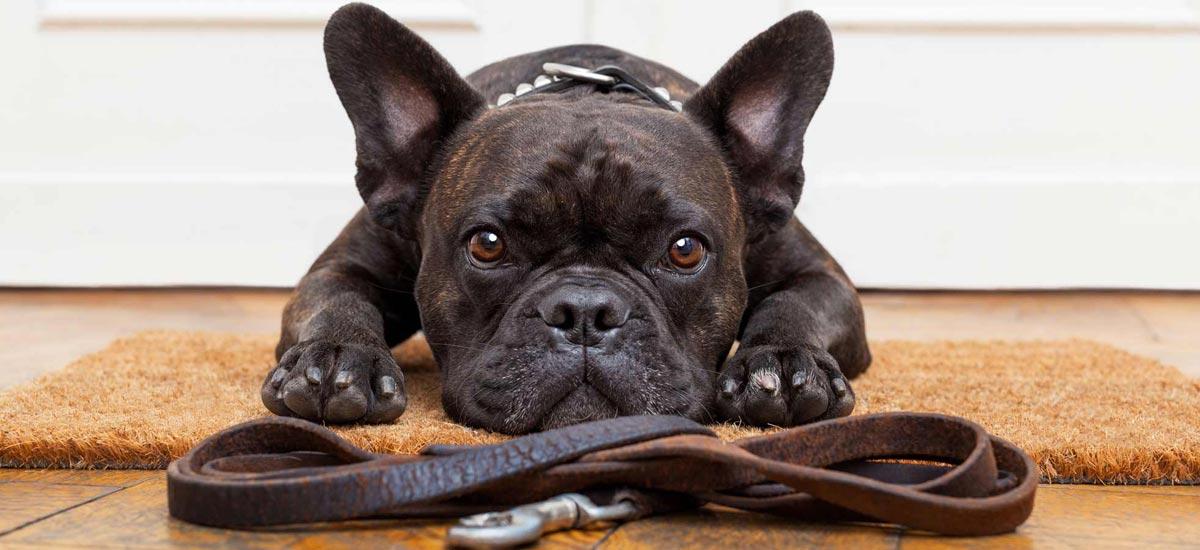 hondenuitlaatservice purmerend